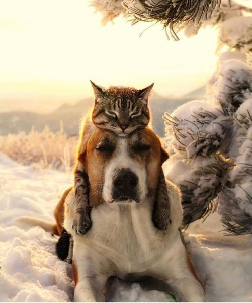 котэ-собака-живность-4865082