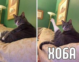 кот-хоба-1 1