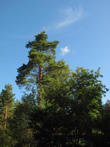 Деревья_IMG_2437