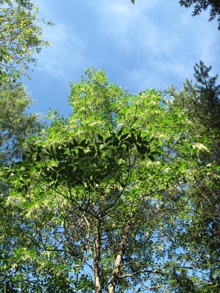 Деревья_IMG_2442