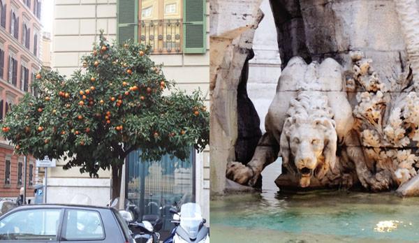 апельс.дерево и лев