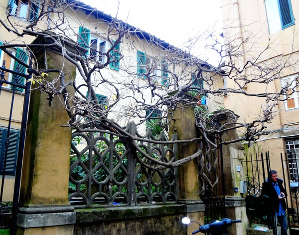 Лукка-дворик