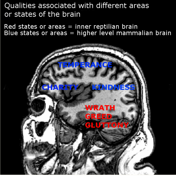 Qualities associated with different areas or states of the brain