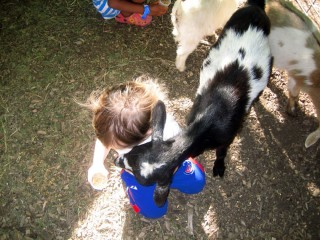 Getting Her Goat