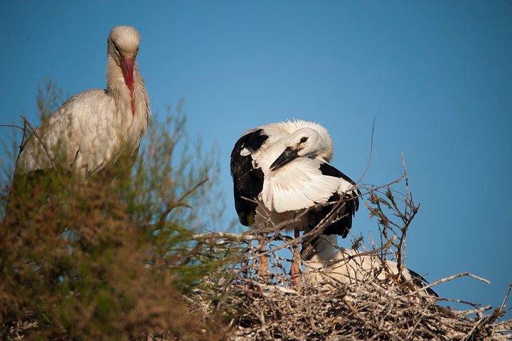 white_stork_and_chicks01_blog_image