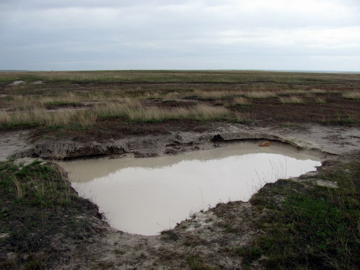 Pallas way in Kurgan region 2012 192