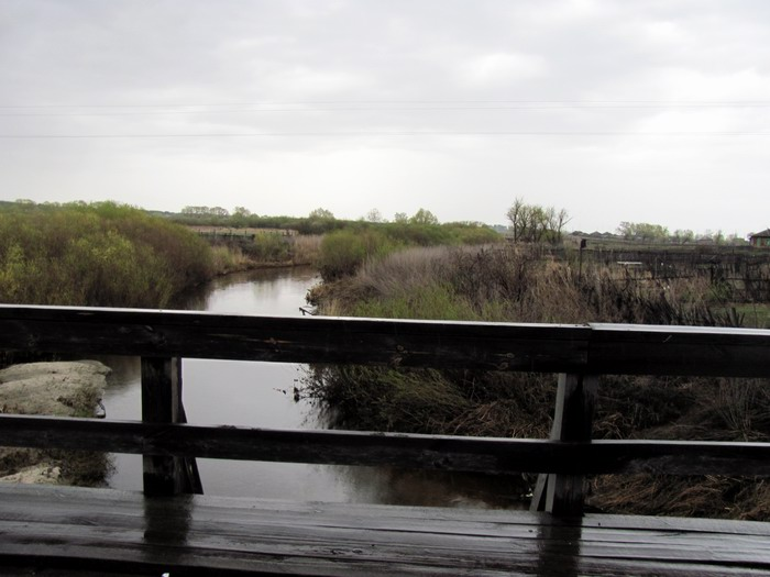 Pallas way in Kurgan region 2012 195