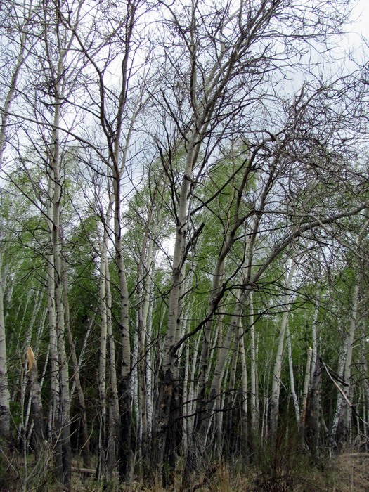 Pallas way in Kurgan region 2012 223