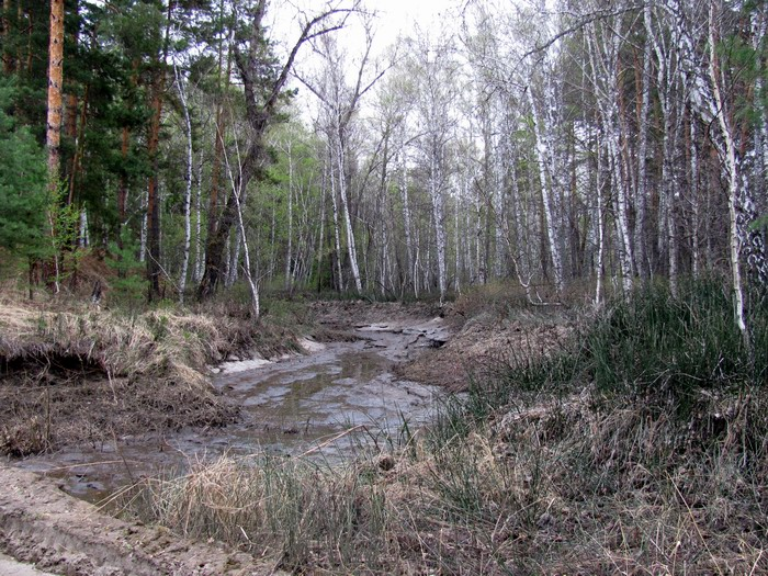 Pallas way in Kurgan region 2012 391 IMG_8082
