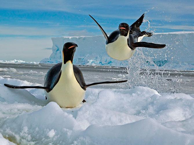 022_Пингвины18
