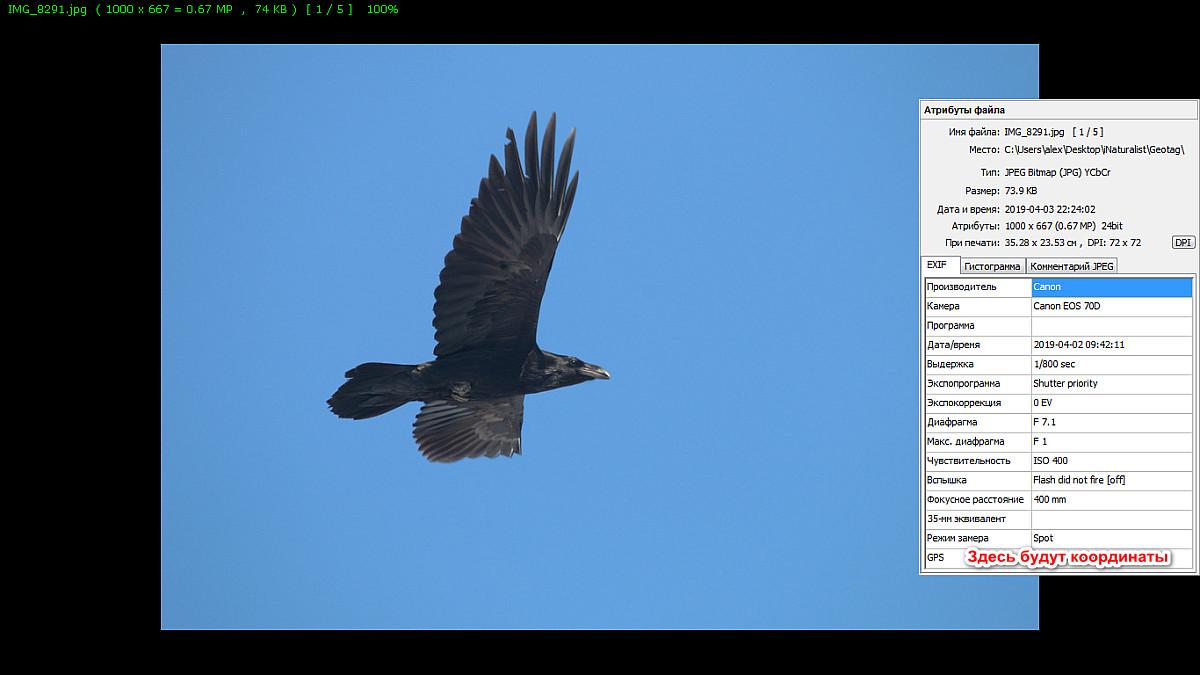 501_geotag_birdchuvashia.png
