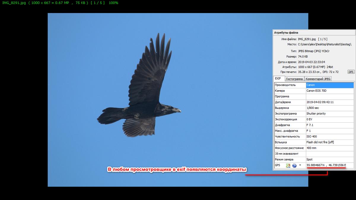 512_geotag_birdchuvashia.png
