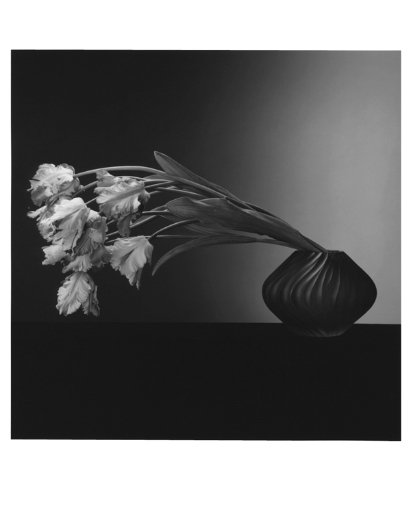 Consider, Robert mapplethorpe rosie congratulate, remarkable