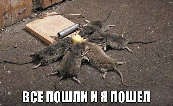 Штайнмайер на днях осуществит визит в Москву, где обсудит дело Савченко - Цензор.НЕТ 6116