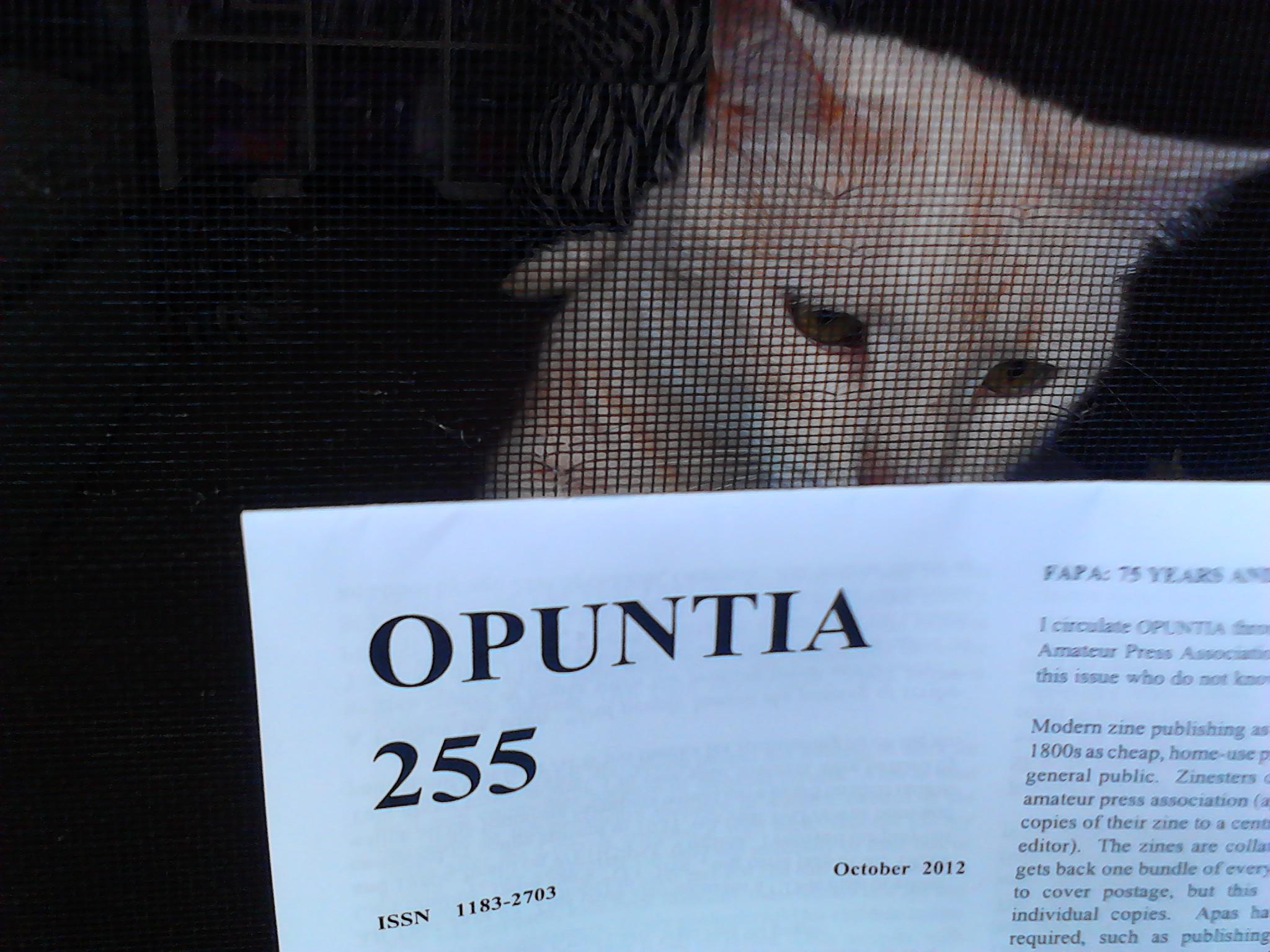 Opuntia 255 Oct 2012
