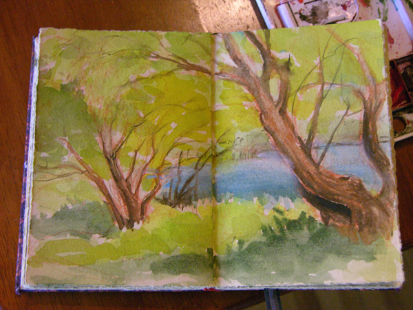 nokomis willow sketch web