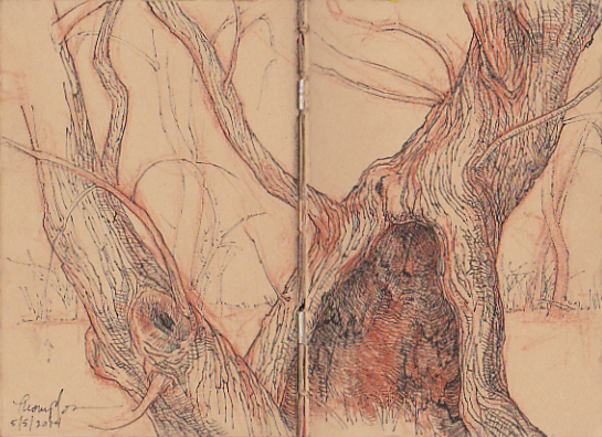 willow sketch scan