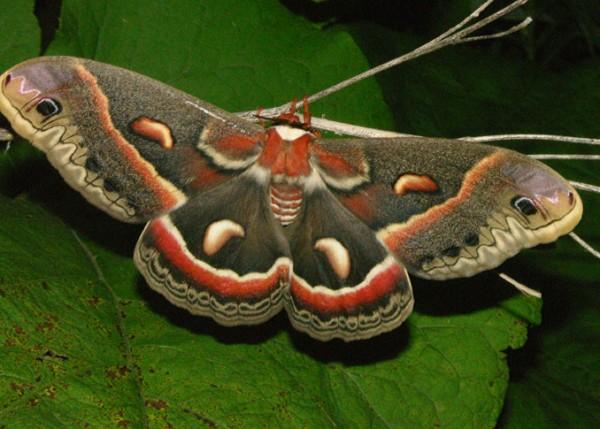gypsy-moth-branch