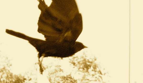my-flying-crow-web
