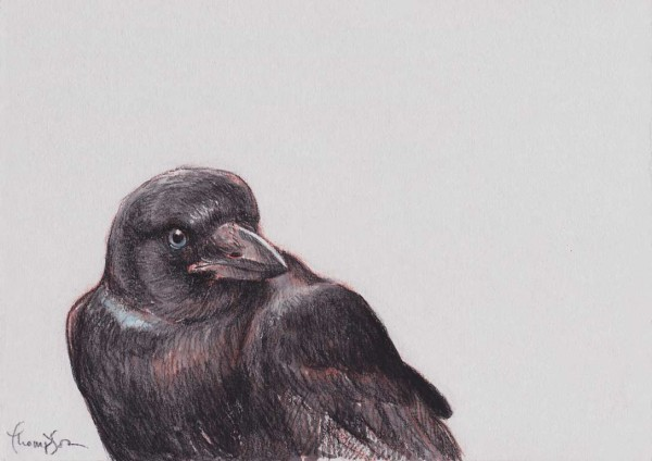 Young-Crow-2-etsy