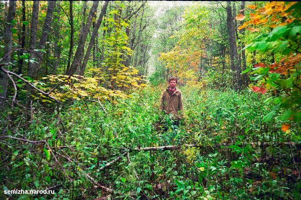 Почему наши леса молодые (5)