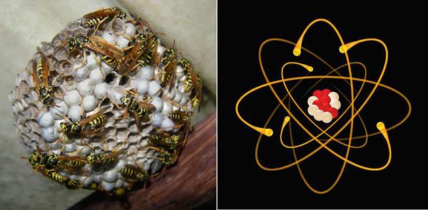 осы-атомы