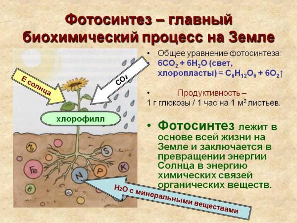 0008-008-Fotosintez-glavnyj-biokhimicheskij-protsess-na-Zemle