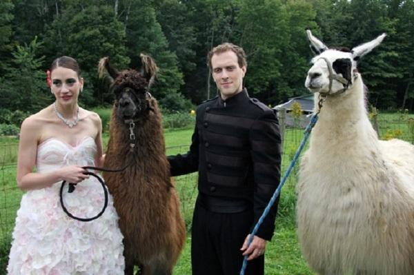 Картинки по запросу Лама на свадьбе