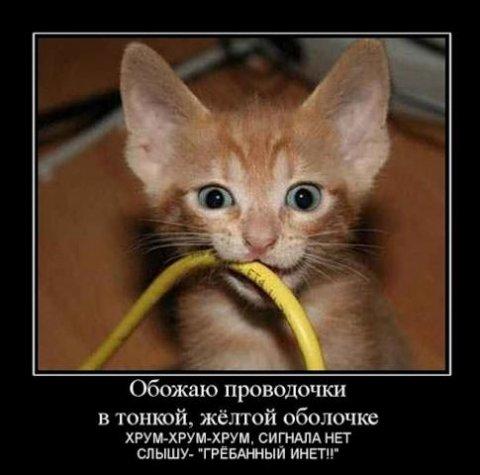 1347011640_smechnie_demotivatori_pro_jivotnih_527_77-86