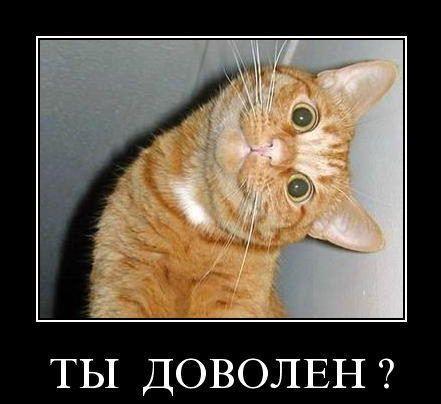 1347011648_smechnie_demotivatori_pro_jivotnih_527_77-126