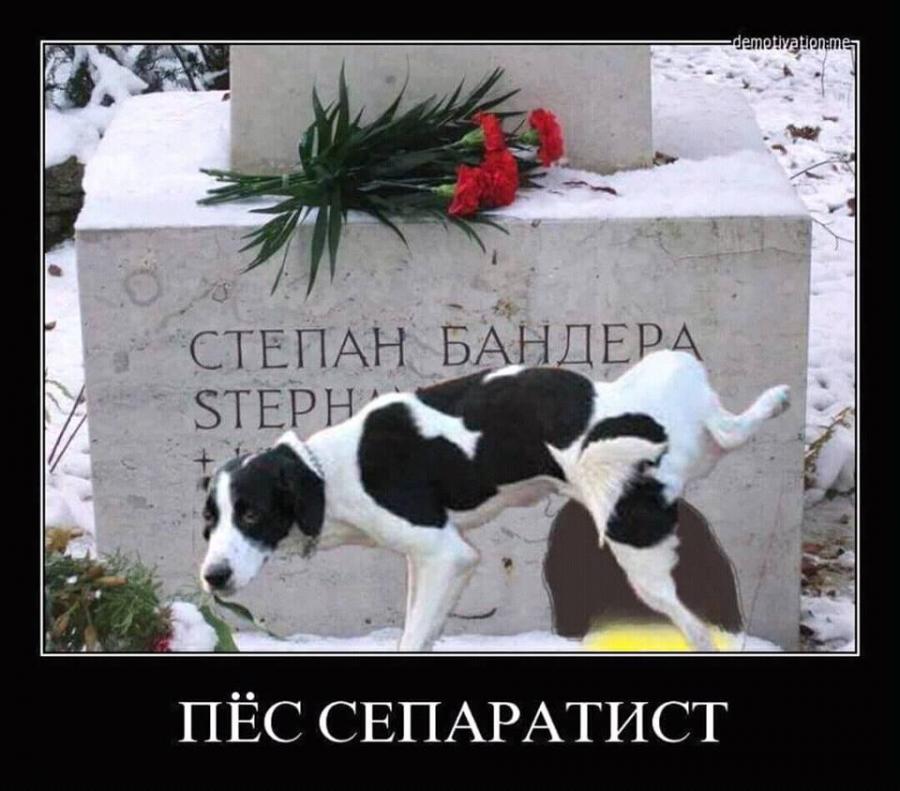 пёс-сепаратист.png