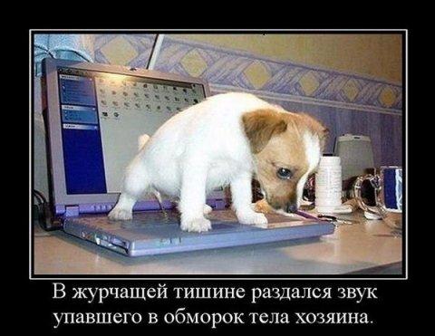 1347011719_smechnie_demotivatori_pro_jivotnih_527_77-154