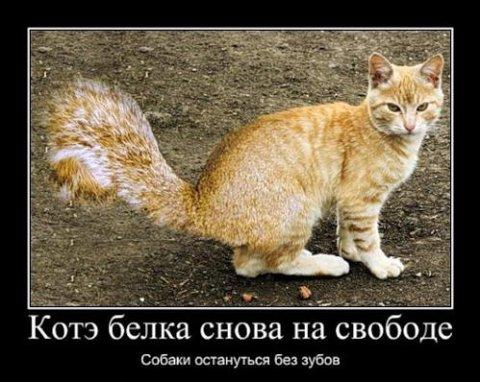 1347011737_smechnie_demotivatori_pro_jivotnih_527_77-43