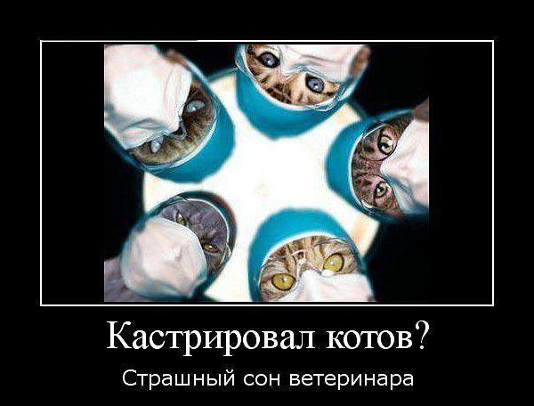 антиветеринарный бумеранг.jpg