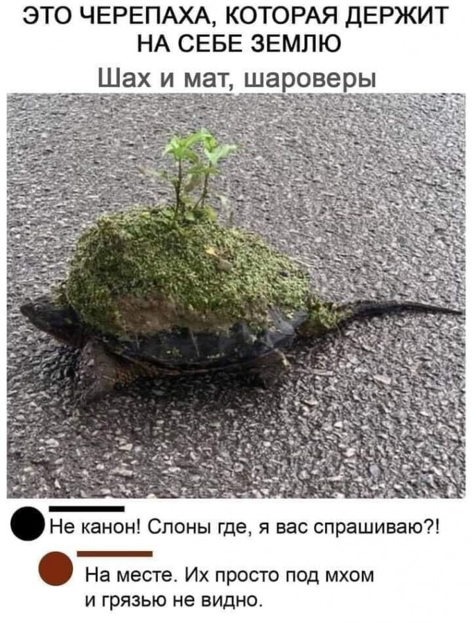 чюрюпаха.jpg