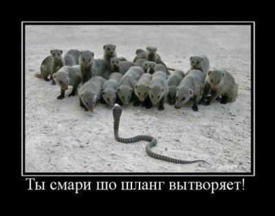 1347011614_smechnie_demotivatori_pro_jivotnih_527_77-56