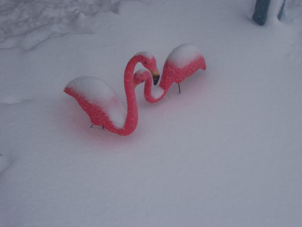 SnowmingoDec
