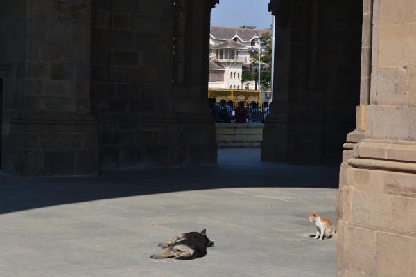 India 2012 116