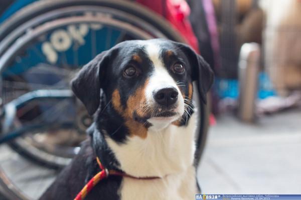 собаки в Чебоксарах