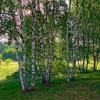 russkaya_dusha