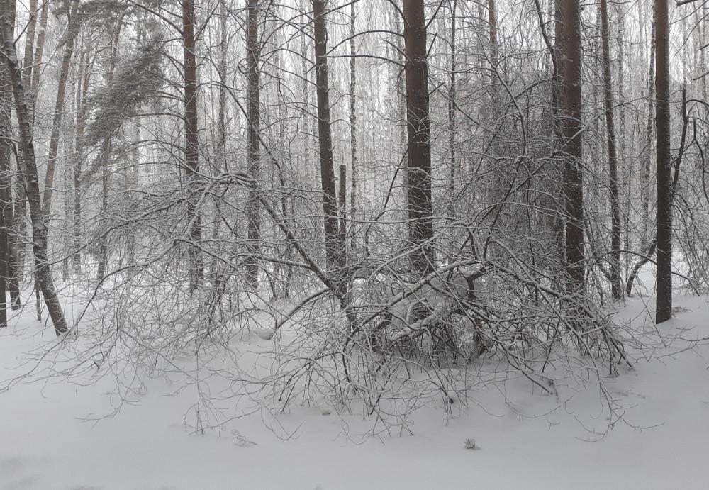 Привет от Зимы)))