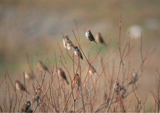 birds_2_030