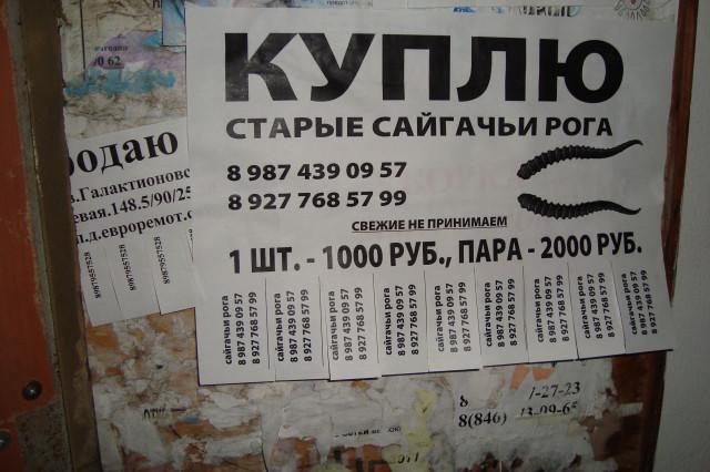 Продаю рога сайгака город астрахань частные объявления 59.ру доска бесплатных объявлений