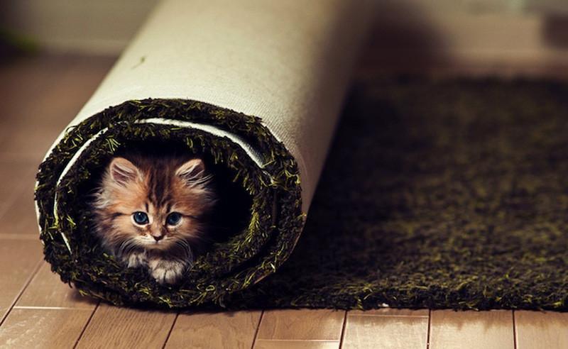 kitten-14