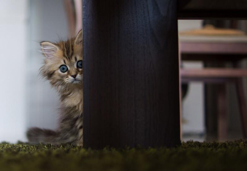 kitten-16