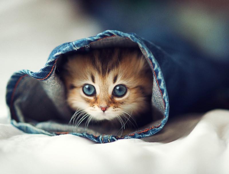 kitten-17