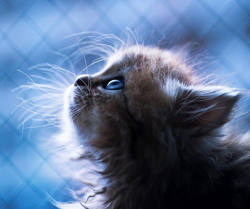 kitten-19