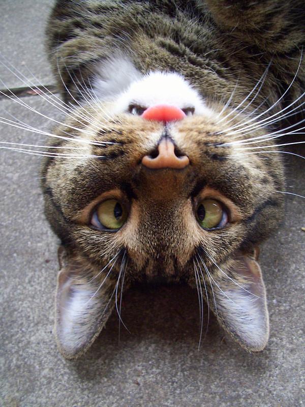 1384093569_funny_animals_cm_20120523_00929_044