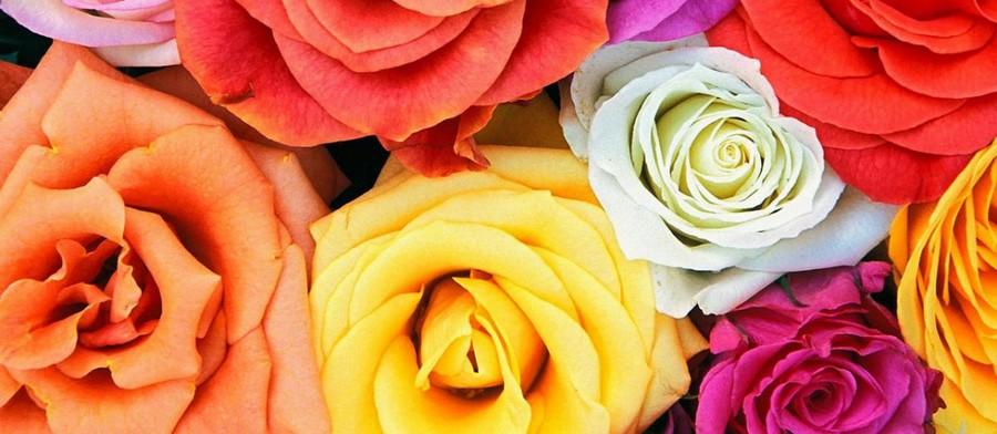 Розы-900