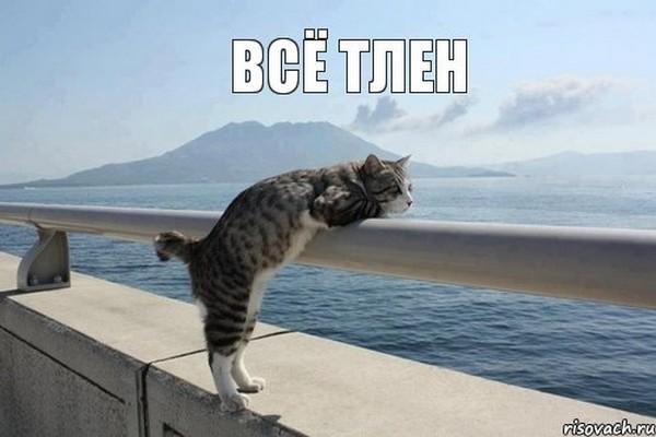 vsyo-tlen_11637958_orig_.jpeg